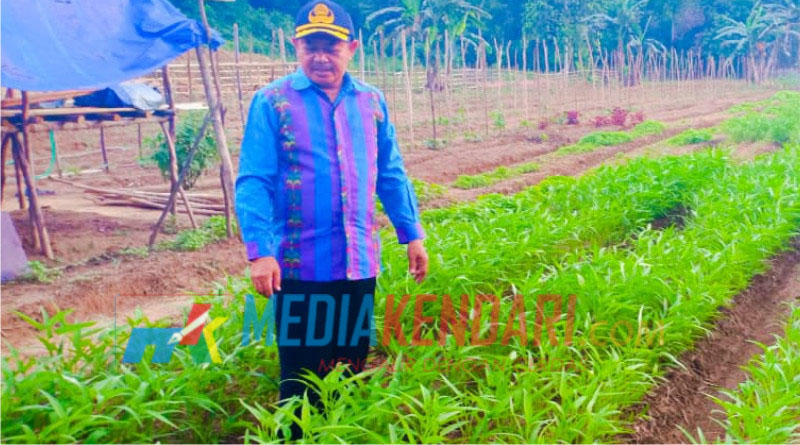 Kepala Dinas Pertanian Konkep, Tahrir, saat meninjau perkembangan perkebunan sayur.