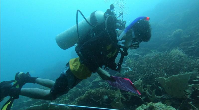 Wisata bawah laut Kabupaten Muna, Sulawesi Tenggara (Sultra).