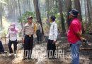 Empat Hektar Hutan Pinus Samparona di Baubau Terbakar