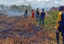 Tim BKSDA Sultra Lakukan Pemadaman Kebakaran Hutan Rawa Gambut di Koltim